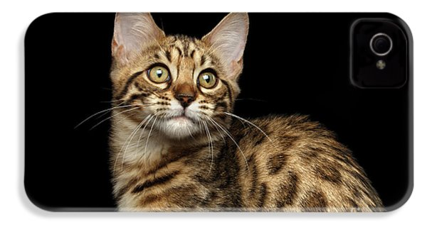 Closeup Bengal Kitty On Isolated Black Background IPhone 4 / 4s Case by Sergey Taran