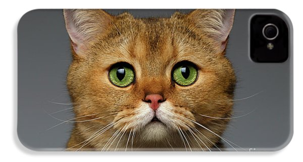 Closeup Golden British Cat With  Green Eyes On Gray IPhone 4 Case by Sergey Taran