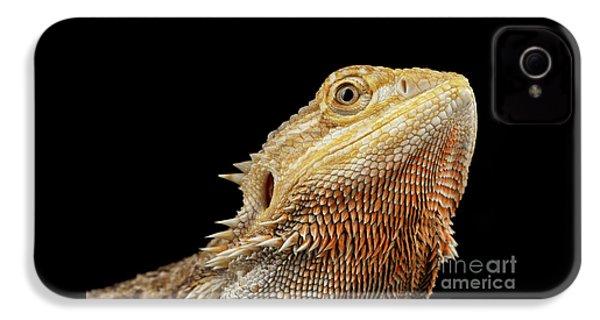 Closeup Head Of Bearded Dragon Llizard, Agama, Isolated Black Background IPhone 4 Case by Sergey Taran