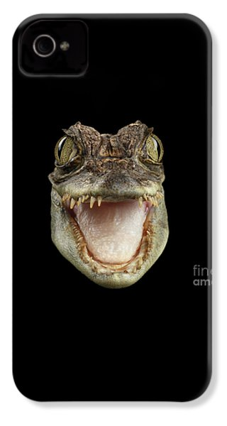 Closeup Head Of Young Cayman Crocodile , Reptile With Opened Mouth Isolated On Black Background, Fro IPhone 4 Case by Sergey Taran