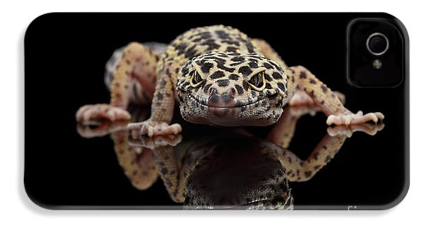 Closeup Leopard Gecko Eublepharis Macularius Isolated On Black Background, Front View IPhone 4 Case by Sergey Taran