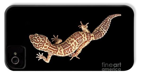 Closeup Leopard Gecko Eublepharis Macularius Isolated On Black Background IPhone 4 Case by Sergey Taran