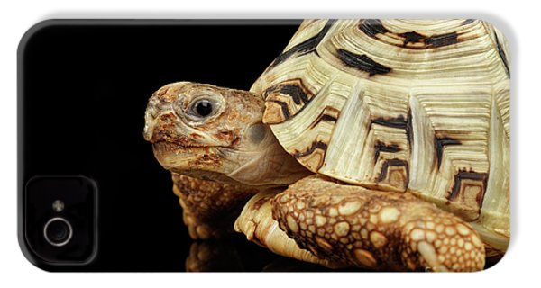 Closeup Leopard Tortoise Albino,stigmochelys Pardalis Turtle With White Shell On Isolated Black Back IPhone 4 Case by Sergey Taran