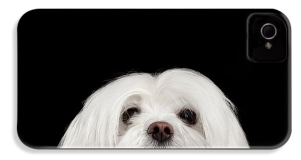 Closeup Nosey White Maltese Dog Looking In Camera Isolated On Black Background IPhone 4 Case by Sergey Taran