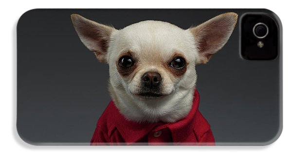 Closeup Portrait Chihuahua Dog In Stylish Clothes. Gray Background IPhone 4 Case by Sergey Taran