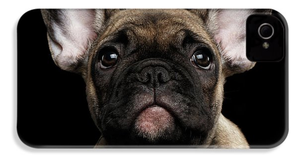 Closeup Portrait French Bulldog Puppy, Cute Looking In Camera IPhone 4 Case by Sergey Taran