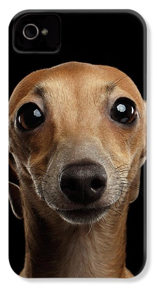Closeup Portrait Italian Greyhound Dog Looking In Camera Isolated Black IPhone 4 Case by Sergey Taran
