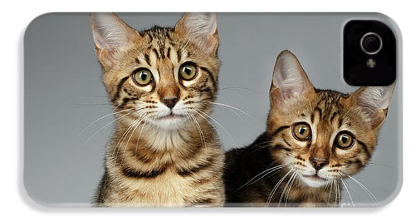 Closeup Portrait Of Two Bengal Kitten On White Background IPhone 4 / 4s Case by Sergey Taran