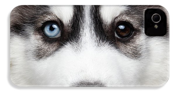 Closeup Siberian Husky Puppy Different Eyes IPhone 4 Case by Sergey Taran
