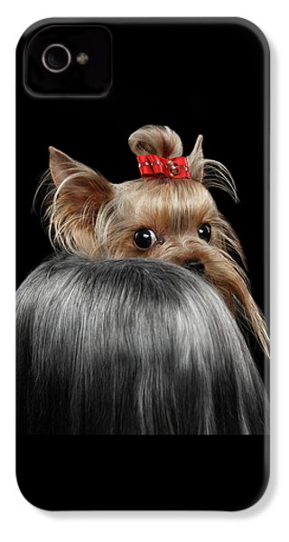 Closeup Yorkshire Terrier Dog, Long Groomed Hair Pity Looking Back IPhone 4 Case by Sergey Taran
