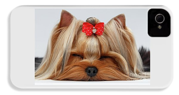 Closeup Yorkshire Terrier Dog With Closed Eyes Lying On White  IPhone 4 Case by Sergey Taran