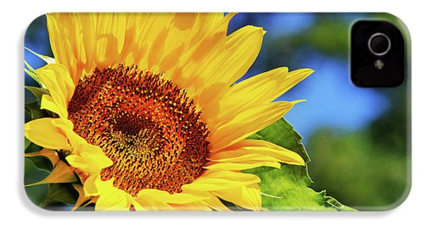 Color Me Happy Sunflower IPhone 4 Case by Christina Rollo
