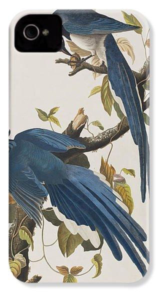 Columbia Jay IPhone 4 Case by John James Audubon