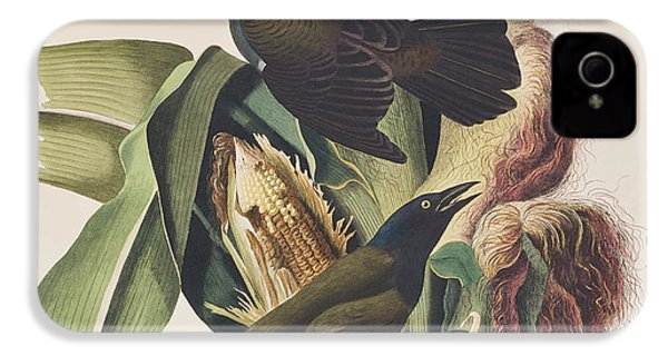 Common Crow IPhone 4 / 4s Case by John James Audubon