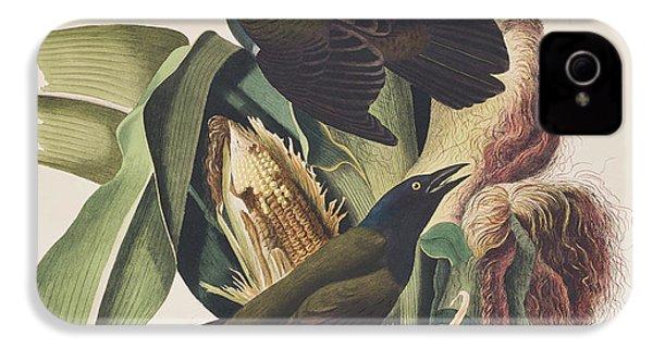 Common Crow IPhone 4 Case by John James Audubon