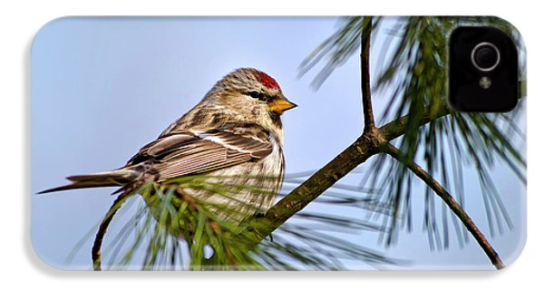 IPhone 4 Case featuring the photograph Common Redpoll Bird by Christina Rollo