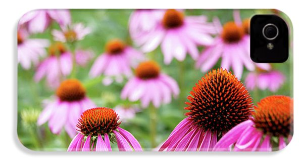 Coneflowers IPhone 4 Case by David Chandler