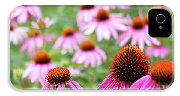 IPhone 4 Case featuring the photograph Coneflowers by David Chandler