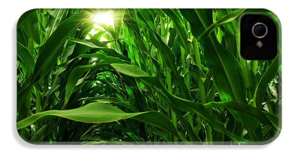 Corn Field IPhone 4 Case by Carlos Caetano