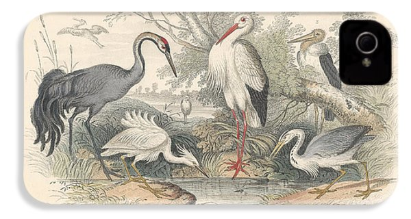 Cranes IPhone 4 / 4s Case by Anton Oreshkin