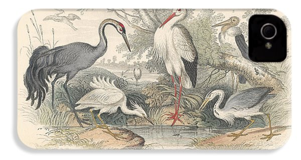 Cranes IPhone 4 Case by Dreyer Wildlife Print Collections