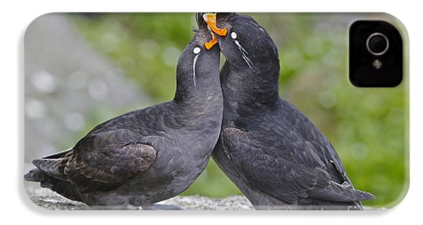 Crested Auklet Pair IPhone 4 Case