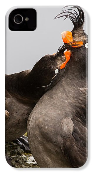 Crested Auklets IPhone 4 Case by Sunil Gopalan