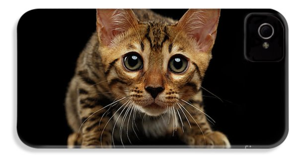 Crouching Bengal Kitty On Black  IPhone 4 / 4s Case by Sergey Taran