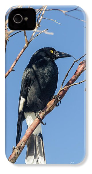 Currawong IPhone 4 Case
