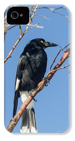 Currawong IPhone 4 Case by Werner Padarin
