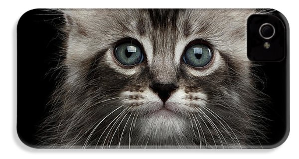 Cute American Curl Kitten With Twisted Ears Isolated Black Background IPhone 4 Case by Sergey Taran