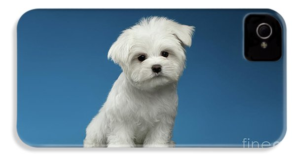 Cute Pure White Maltese Puppy Standing And Curiously Looking In Camera Isolated On Blue Background IPhone 4 Case by Sergey Taran