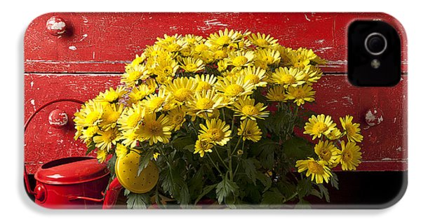 Daisy Plant In Drawers IPhone 4 / 4s Case by Garry Gay