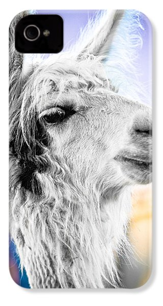 Dirtbag Llama IPhone 4 / 4s Case by TC Morgan