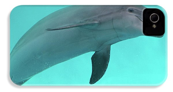 Dolphin IPhone 4 / 4s Case by Sandy Keeton