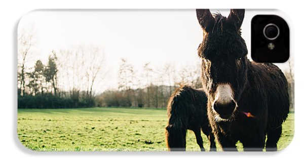 Donkey And Pony IPhone 4 Case by Pati Photography