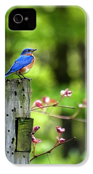 Eastern Bluebird IPhone 4 Case by Christina Rollo