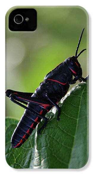 Eastern Lubber Grasshopper IPhone 4 / 4s Case by Richard Rizzo