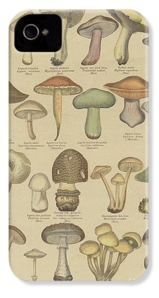 Edible And Poisonous Mushrooms IPhone 4 Case by French School