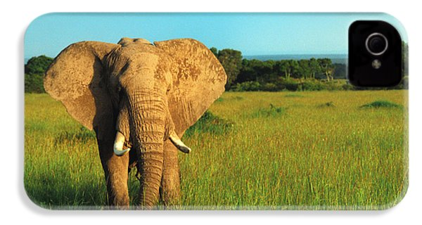 Elephant IPhone 4 / 4s Case by Sebastian Musial