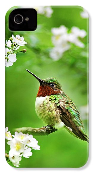 Fauna And Flora - Hummingbird With Flowers IPhone 4 Case by Christina Rollo