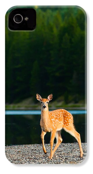 Fawn IPhone 4 / 4s Case by Sebastian Musial