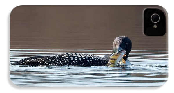 Feeding Common Loon Square IPhone 4 / 4s Case by Bill Wakeley