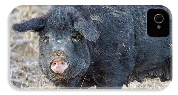 IPhone 4 Case featuring the photograph Female Hog by James BO Insogna