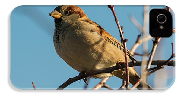 Female House Sparrow IPhone 4 Case by Mike Dawson