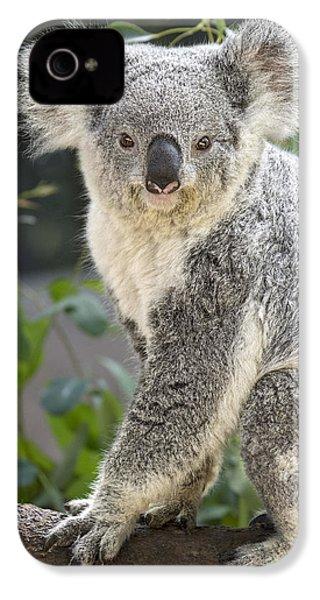 Female Koala IPhone 4 Case