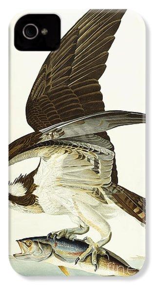 Fish Hawk IPhone 4 Case by John James Audubon