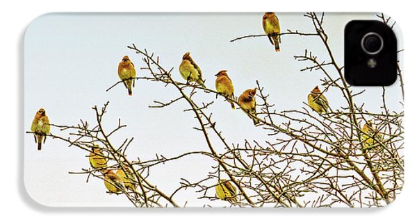 Flock Of Cedar Waxwings  IPhone 4 Case by Geraldine Scull