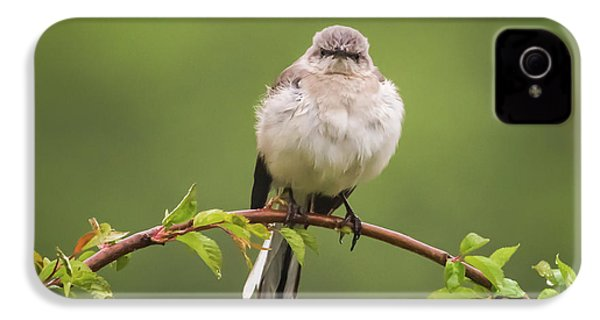 Fluffy Mockingbird IPhone 4 Case by Terry DeLuco