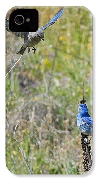 Flyby Flirt IPhone 4 / 4s Case by Mike Dawson